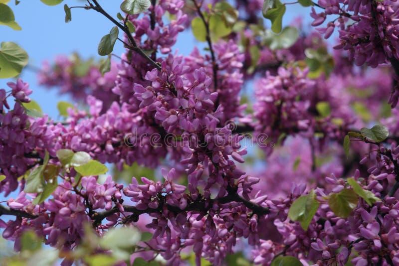 Ιώδη λουλούδια σε ένα δέντρο στοκ φωτογραφία με δικαίωμα ελεύθερης χρήσης