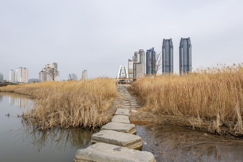 Κάλαμοι πάρκων Taehwagang στοκ φωτογραφίες με δικαίωμα ελεύθερης χρήσης