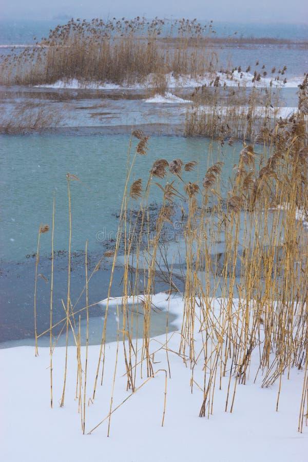Κάλαμος στον αέρα και το χιόνι στοκ φωτογραφίες