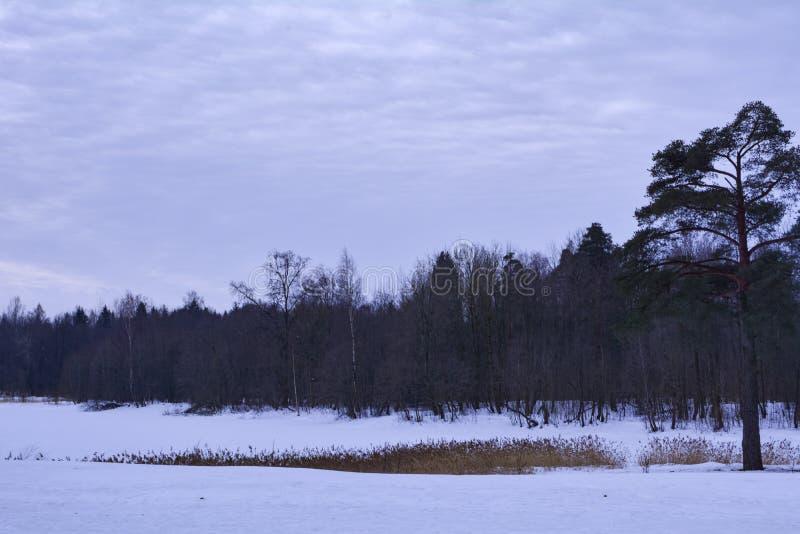 Κάλυμμα χιονιού σε μια παγωμένη λίμνη στοκ εικόνα με δικαίωμα ελεύθερης χρήσης