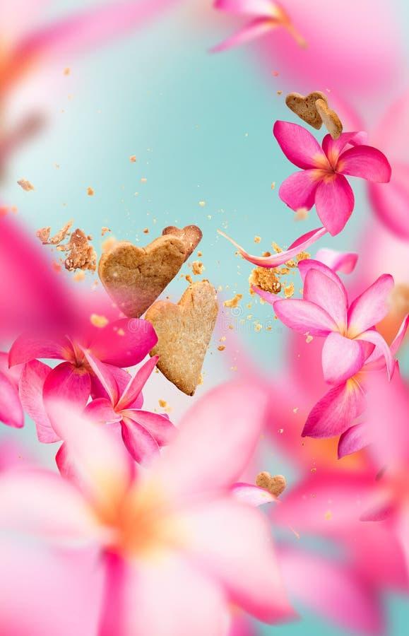Κάρτα που πετά τα ρόδινα πέταλα λουλουδιών frangipani στοκ φωτογραφίες με δικαίωμα ελεύθερης χρήσης