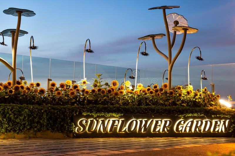 Κήπος ηλίανθων με την περιοχή καπνίσματος στον αερολιμένα της Σιγκαπούρης κατά τη διάρκεια της ανατολής στοκ εικόνα με δικαίωμα ελεύθερης χρήσης