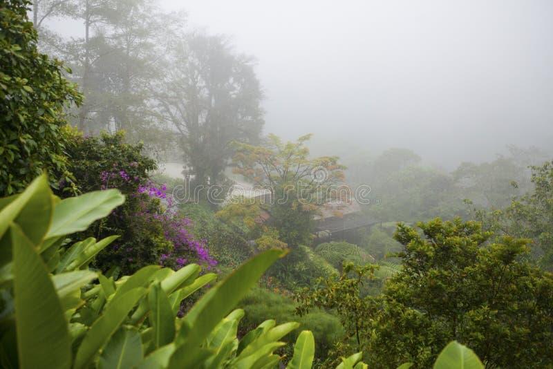 Κήπος καταρρακτών Λα Παζ, Κόστα Ρίκα στοκ φωτογραφίες