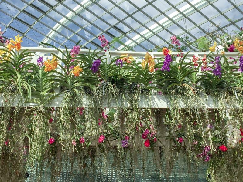 Κήπος ορχιδεών στοκ φωτογραφία