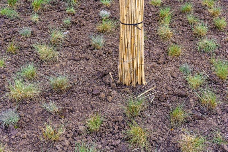 Κήπος στο εύφορο υπόβαθρο εδαφολογικής σύστασης στοκ εικόνα