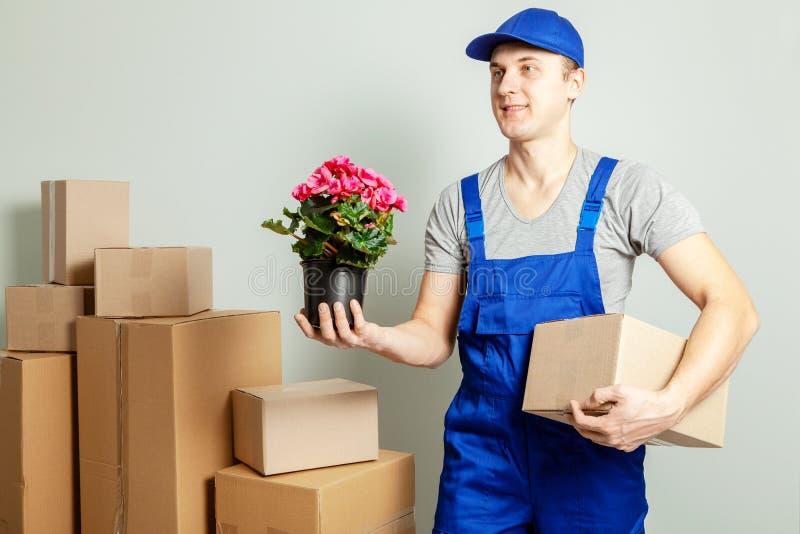 Κίνηση ημέρας Ο φορτωτής ή ο αγγελιαφόρος φέρνει τα κουτιά από χαρτόνι με το λουλούδι στο δοχείο ενάντια στον γκρίζο τοίχο στοκ εικόνα με δικαίωμα ελεύθερης χρήσης