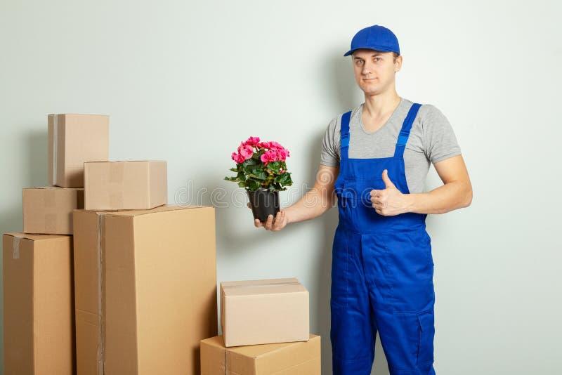 Κίνηση ημέρας Ο φορτωτής ή ο αγγελιαφόρος φέρνει τα κουτιά από χαρτόνι με το λουλούδι στο δοχείο ενάντια στον γκρίζο τοίχο στοκ φωτογραφία με δικαίωμα ελεύθερης χρήσης