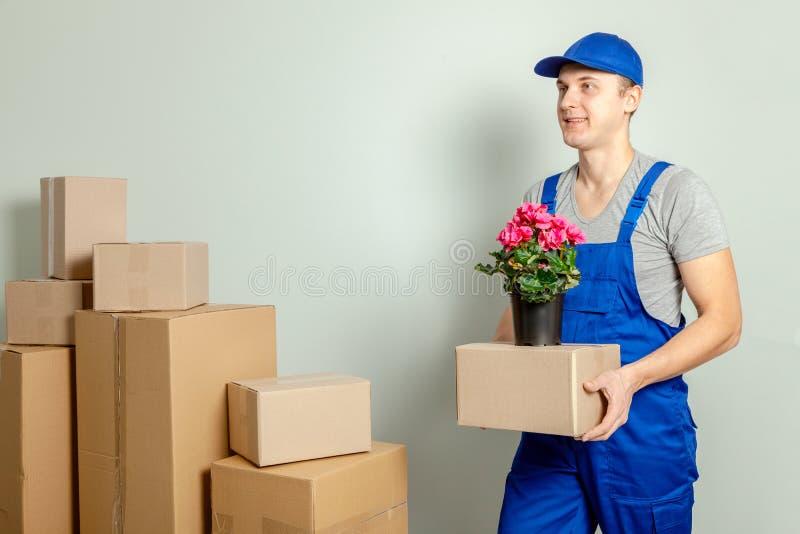 Κίνηση ημέρας Ο φορτωτής ή ο αγγελιαφόρος φέρνει τα κουτιά από χαρτόνι με το λουλούδι στο δοχείο ενάντια στον γκρίζο τοίχο στοκ εικόνες με δικαίωμα ελεύθερης χρήσης