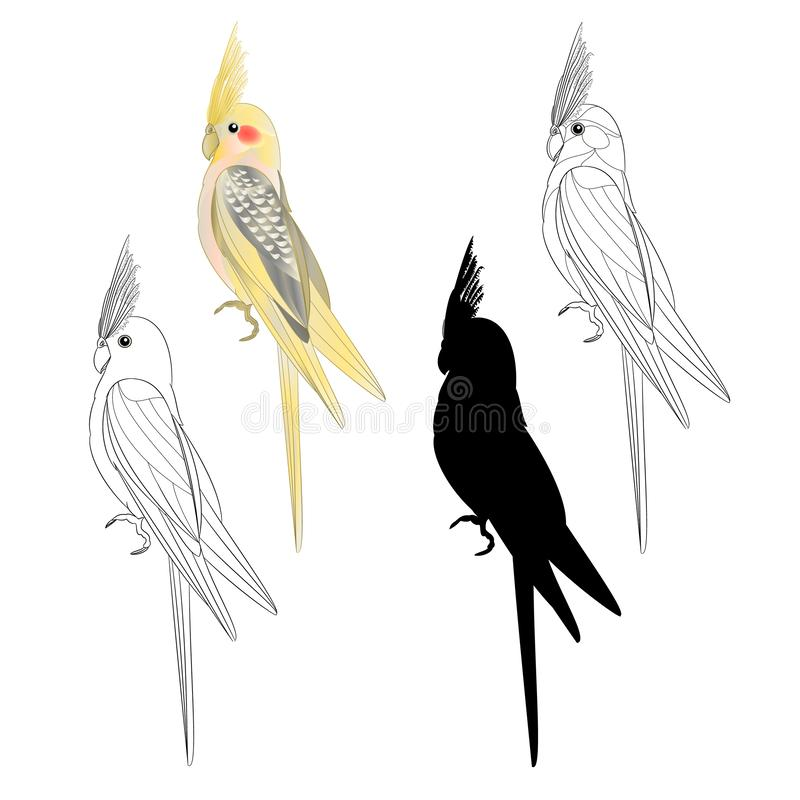 Κίτρινη cockatiel χαριτωμένη τροπική σκιαγραφία ύφους watercolor παπαγάλων πουλιών αστεία της περίληψης σε ένα άσπρο εκλεκτής ποι διανυσματική απεικόνιση