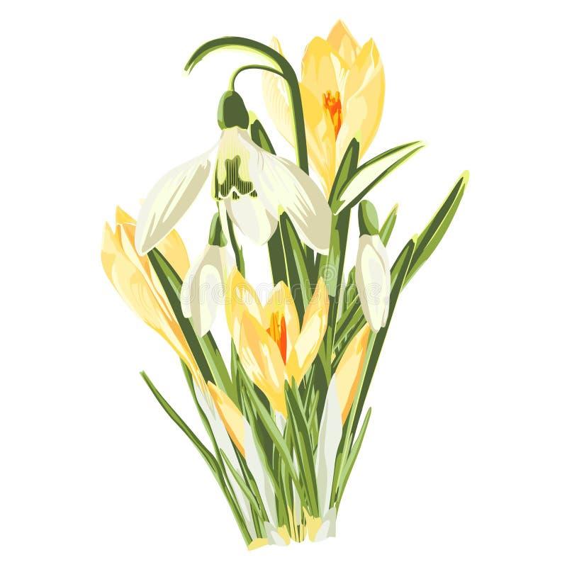 Κίτρινοι κρόκος άνοιξη και snowdrops ανθοδέσμη λουλουδιών στο άσπρο υπόβαθρο ελεύθερη απεικόνιση δικαιώματος
