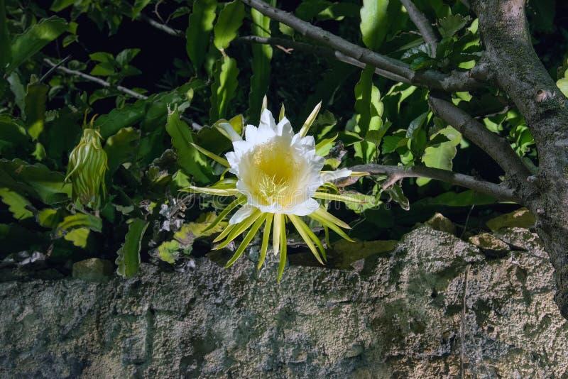 Καλό λουλούδι στη νύχτα στη Σαρδηνία στοκ εικόνα