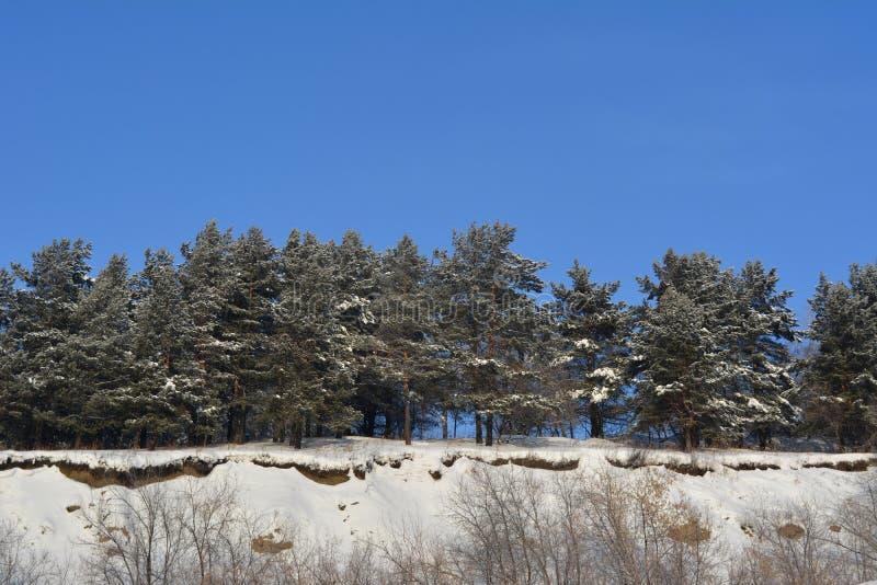 καλυμμένα δέντρα χιονιού π&ep Χειμερινό δάσος στο βουνό στοκ φωτογραφία