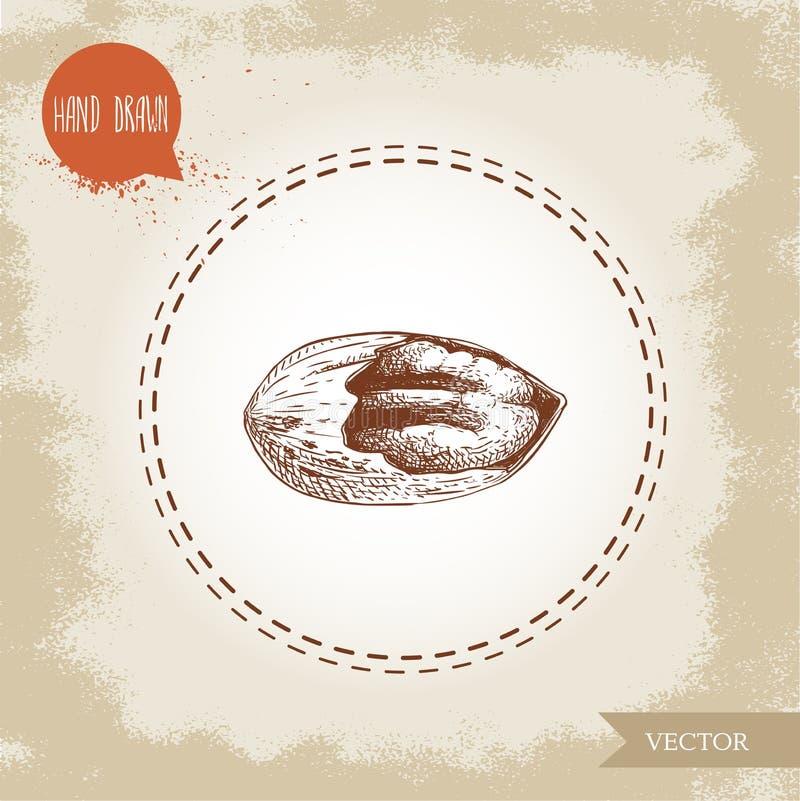 Καρύδι πεκάν Συρμένος χέρι πυρήνας καρυδιών πεκάν σκίτσων ραγισμένος ύφος Οργανική διανυσματική απεικόνιση πρόχειρων φαγητών και  διανυσματική απεικόνιση