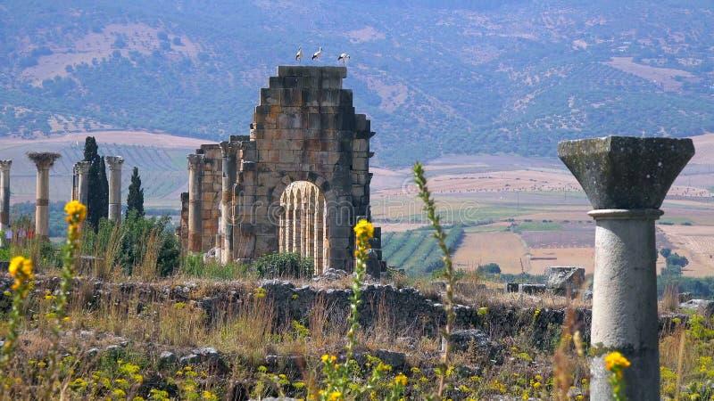 Καταστροφές της ρωμαϊκής βασιλικής Volubilis, μιας περιοχής παγκόσμιων κληρονομιών της ΟΥΝΕΣΚΟ κοντά σε Meknes και του Fez, Μαρόκ στοκ εικόνα με δικαίωμα ελεύθερης χρήσης