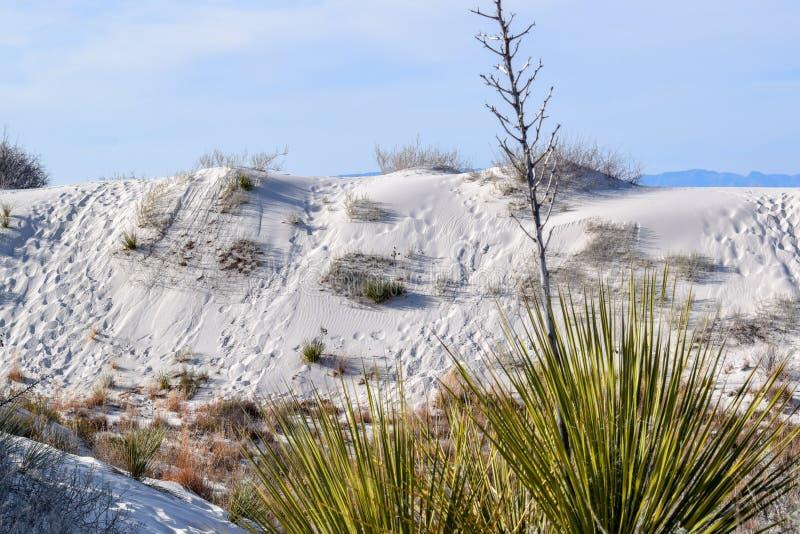 Καταπληκτική άσπρη έρημος άμμων στο Νέο Μεξικό, ΗΠΑ στοκ εικόνες με δικαίωμα ελεύθερης χρήσης