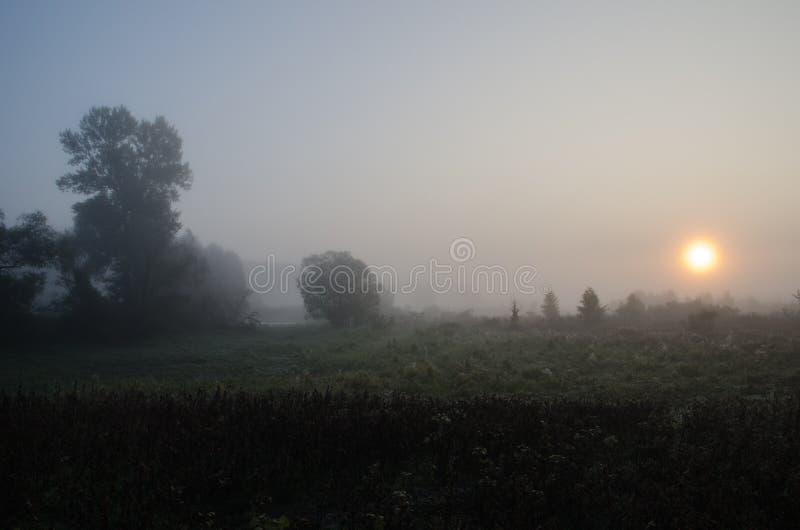 Καταπληκτική αυγή με την ομίχλη, τον ήλιο και το δέντρο στοκ φωτογραφία
