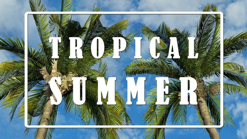 Κείμενο - τροπικό καλοκαίρι - φοίνικες στο κλίμα μπλε ουρανού απεικόνιση αποθεμάτων