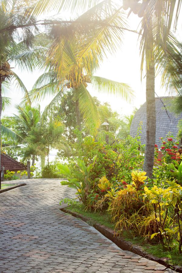 Κενός δρόμος πεζοδρομίων στο τροπικό πάρκο με τις εξωτικούς εγκαταστάσεις και τους φοίνικες, στο Μπαλί, Ινδονησία στοκ φωτογραφίες με δικαίωμα ελεύθερης χρήσης
