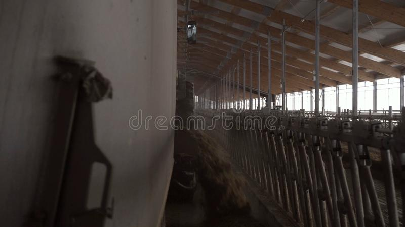Κινηματογράφηση σε πρώτο πλάνο της μηχανής τροφών στο αγρόκτημα footage Το φορτηγό τροφών ξεφορτώνει την τροφή ζωικού κεφαλαίου σ στοκ φωτογραφίες με δικαίωμα ελεύθερης χρήσης