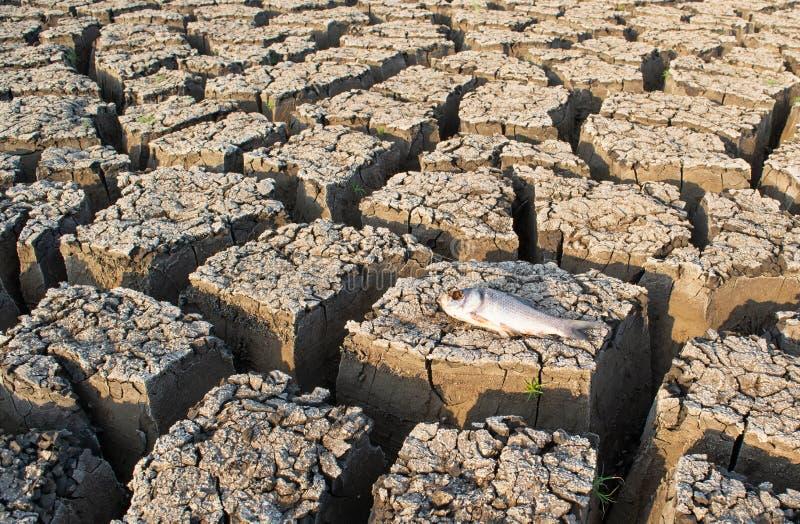 Κινηματογράφηση σε πρώτο πλάνο των πεθαμένων ψαριών σε μια στεγνωμένη κενή δεξαμενή ή του φράγματος λόγω θερινό heatwave, χαμηλών στοκ εικόνες με δικαίωμα ελεύθερης χρήσης