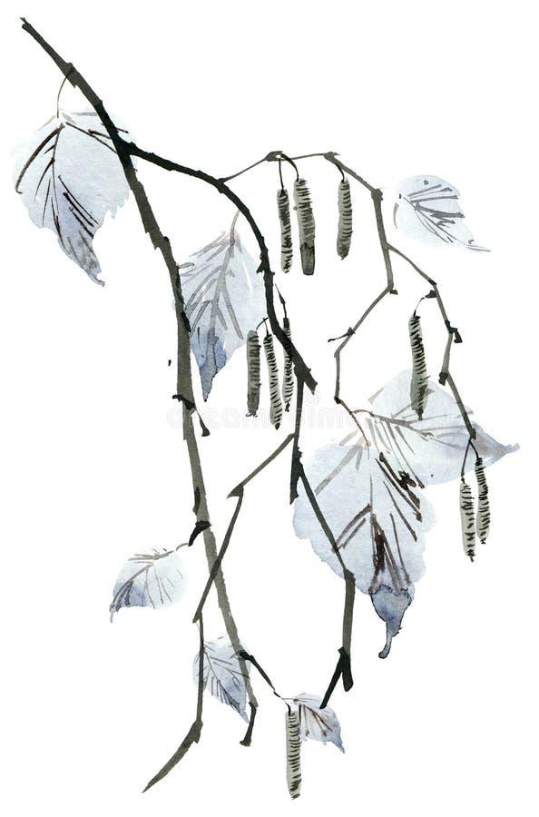 Κλάδος δέντρων σημύδων απεικόνιση αποθεμάτων