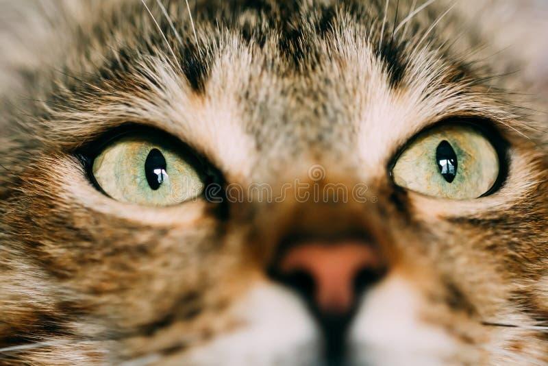 Κλείστε επάνω τα όμορφα αστεία μάτια γατών καλό κατοικίδιο ζώο στοκ εικόνες