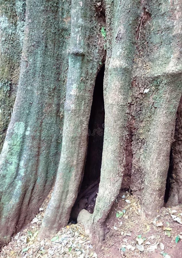 Κλείστε επάνω του φλοιού ενός δέντρου στοκ εικόνα με δικαίωμα ελεύθερης χρήσης