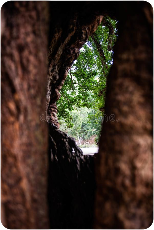 Κοίλη τρύπα δέντρων όπως την Ταϊβάν στοκ εικόνα