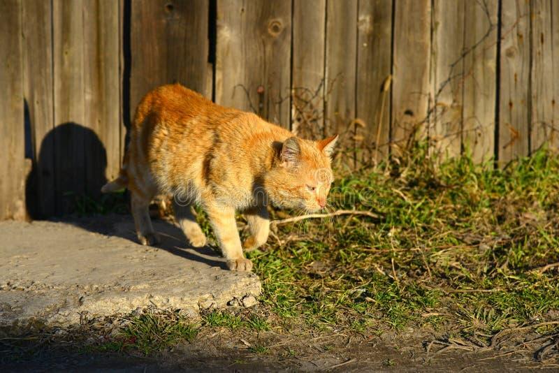 Κοκκινομάλλης γάτα κοντά σε έναν ξύλινο φράκτη σε ένα υπόβαθρο του φωτός του ήλιου σε ένα θερινό βράδυ στοκ φωτογραφία