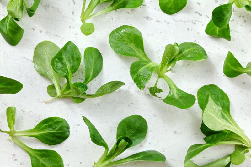 Κορυφή κάτω από την άποψη, υγρό locusta Valerianella cornsalad σχετικά με το λευκό εργαζόμενο πίνακα, υγιής πράσινη έννοια φύλλων στοκ φωτογραφίες με δικαίωμα ελεύθερης χρήσης