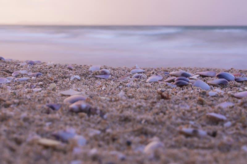 Κοχύλια κινηματογραφήσεων σε πρώτο πλάνο στην παραλία στο ηλιοβασίλεμα, υπόβαθρο φύσης στοκ εικόνες