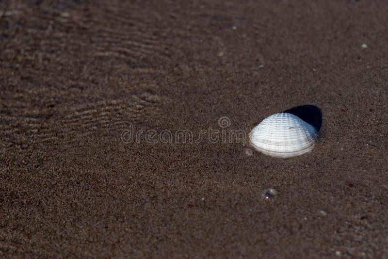 Κοχύλι θάλασσας από την παραλία στοκ εικόνες