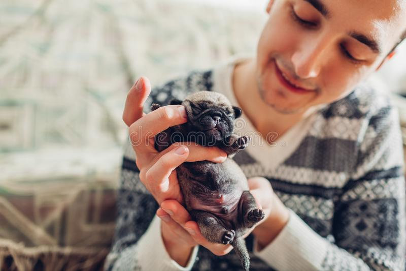 Κουτάβι σκυλιών μαλαγμένου πηλού εκμετάλλευσης νεαρών άνδρων στα χέρια Μικρός ύπνος κουταβιών Σκυλιά αναπαραγωγής στοκ εικόνες
