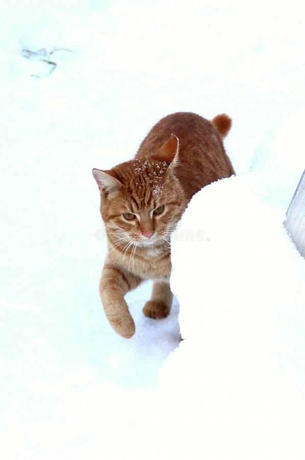 Κρύψιμο γατακιών πιπεροριζών πίσω από snowdrift στοκ φωτογραφίες με δικαίωμα ελεύθερης χρήσης