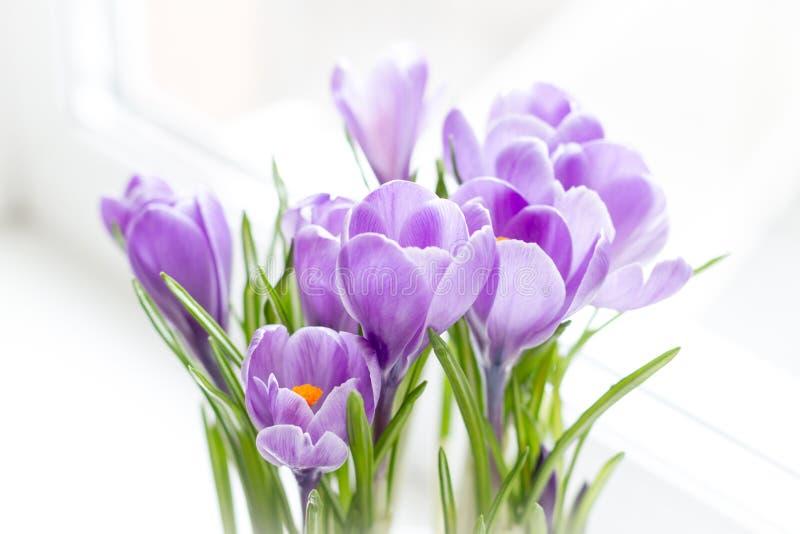 κρόκοι Μακρο πυροβολισμός Εκλεκτική εστίαση διαφήμιση Κάρτες έννοιας για τα συγχαρητήρια Λεπτά λουλούδια για το mom στοκ φωτογραφία με δικαίωμα ελεύθερης χρήσης