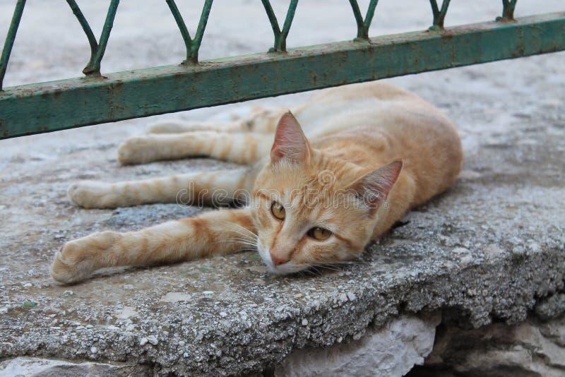Κόκκινη γάτα κάτω από το φράκτη στοκ εικόνα
