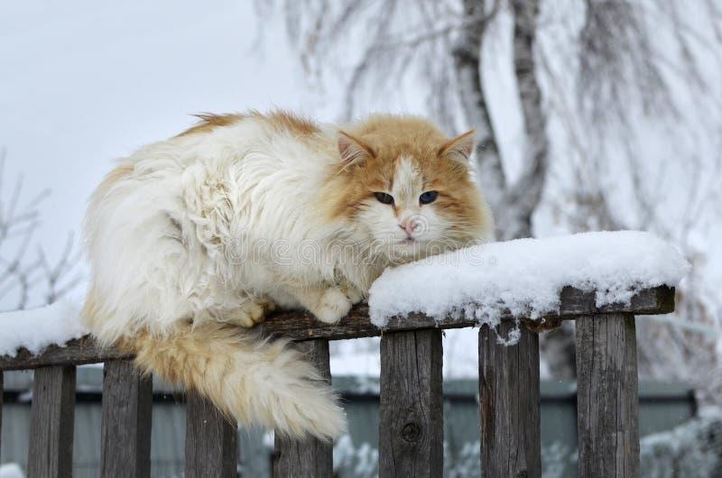 Κόκκινη συνεδρίαση γατών στον παλαιό φράκτη στο χωριό μια νεφελώδη χειμερινή ημέρα στοκ φωτογραφία με δικαίωμα ελεύθερης χρήσης