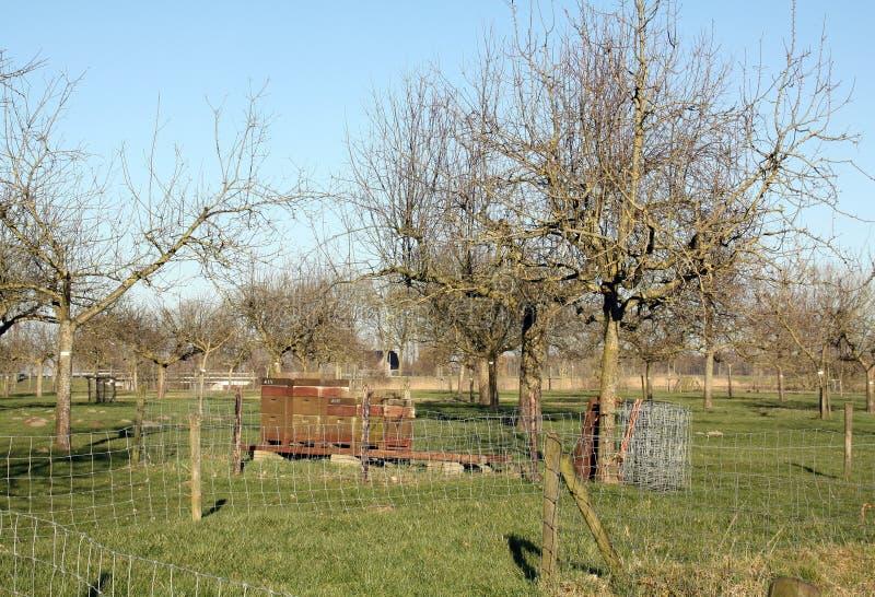 Κυψέλες στον οπωρώνα σε Leens στοκ φωτογραφία με δικαίωμα ελεύθερης χρήσης