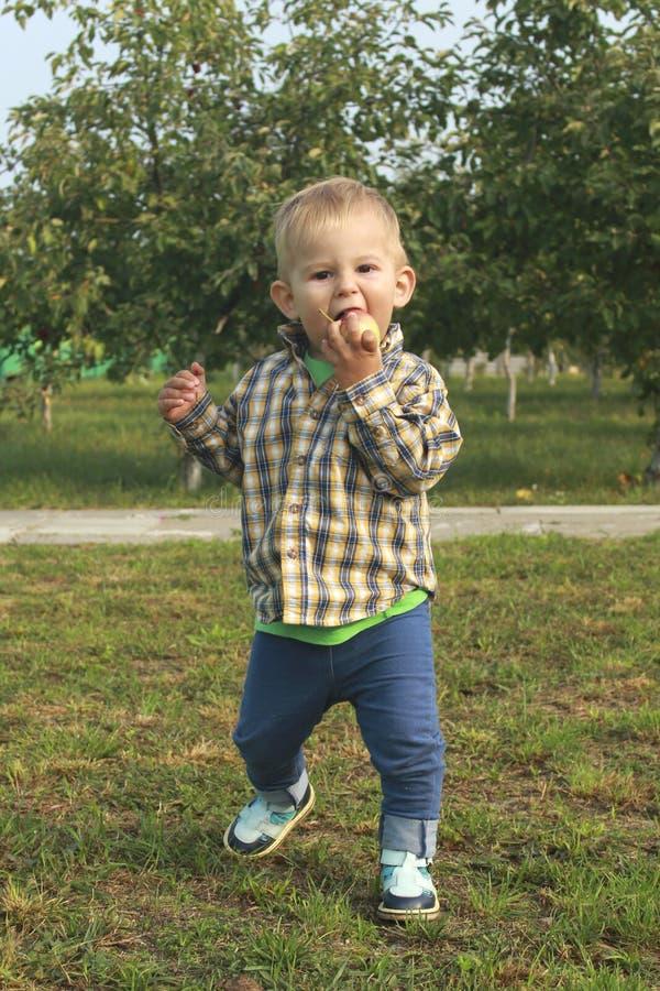 Λίγο αγόρι μικρών παιδιών που τρώει τα κόκκινα μήλα στον οπωρώνα στοκ φωτογραφία με δικαίωμα ελεύθερης χρήσης