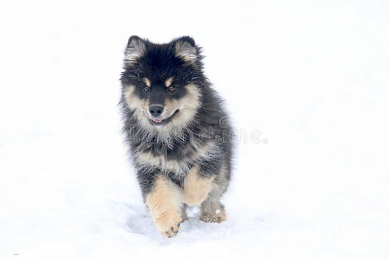 Λίγο σκυλί που τρέχει στο χιόνι στοκ εικόνα με δικαίωμα ελεύθερης χρήσης