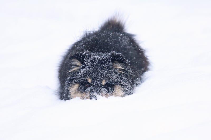 Λίγο παιχνίδι σκυλιών στο χιόνι στοκ φωτογραφίες με δικαίωμα ελεύθερης χρήσης