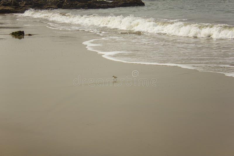 Λίγο πουλί στην αμμώδη παραλία στο υπόβαθρο του ωκεάνιου κύματος στοκ εικόνες με δικαίωμα ελεύθερης χρήσης