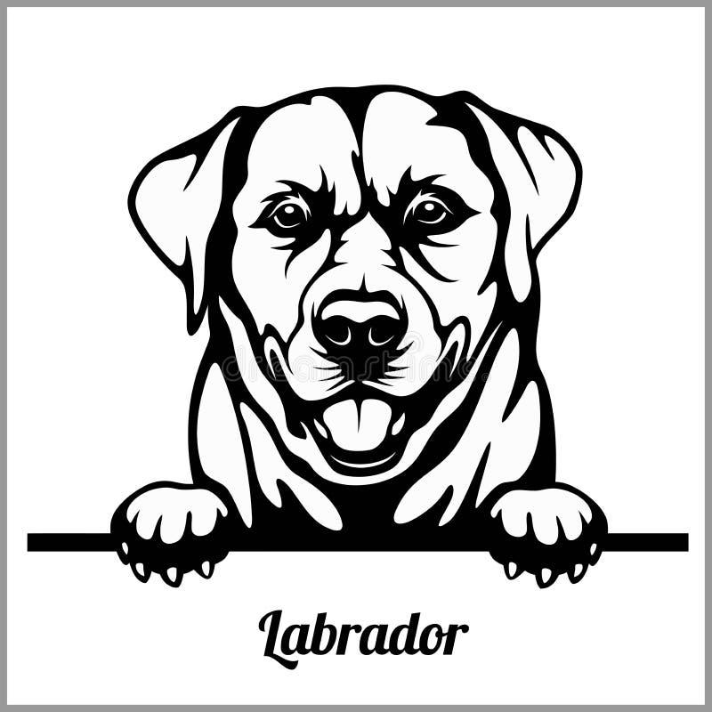 Λαμπραντόρ - σκυλιά κρυφοκοιτάγματος - - κεφάλι προσώπου φυλής που απομονώνεται στο λευκό ελεύθερη απεικόνιση δικαιώματος