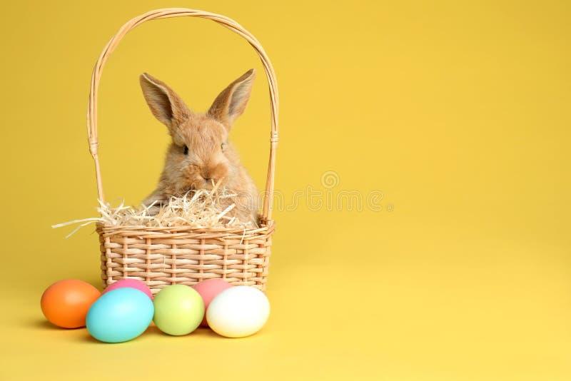 Λατρευτό γούνινο λαγουδάκι Πάσχας στο ψάθινο καλάθι και βαμμένα αυγά στο υπόβαθρο χρώματος στοκ εικόνες