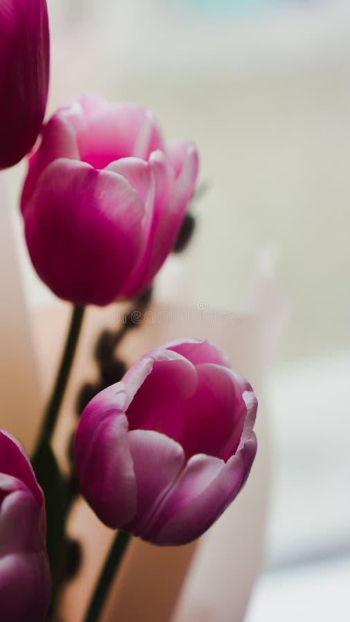 Λουλούδια άνοιξη - μια ανθοδέσμη των ρόδινων τουλιπών που φωτίζονται με το μαλακό φως στοκ εικόνες