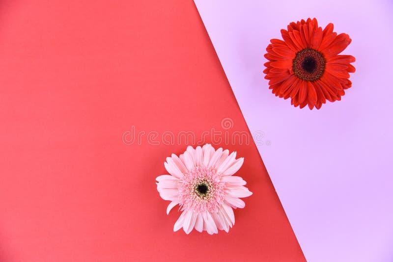 Λουλούδια άνοιξη Gerbera φρέσκα στις τροπικές εγκαταστάσεις σύνθεσης πλαισίων λουλουδιών ζωηρόχρωμοι ρόδινος και κόκκινος στοκ φωτογραφία με δικαίωμα ελεύθερης χρήσης
