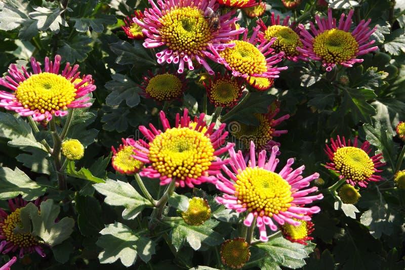 Λουλούδια από τη δυτική λίμνη στοκ εικόνα