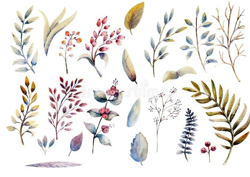 λουλούδια ι συντακτών καθορισμένο watercolor εικόνων ζωγραφικής τριαντάφυλλα άνευ ραφής διάνυσμα απεικόνισης στοιχείων γραφικό Αν ελεύθερη απεικόνιση δικαιώματος