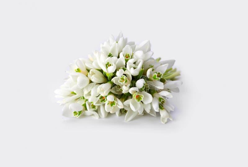 Λουλούδι άνοιξη snowdrop στοκ εικόνες