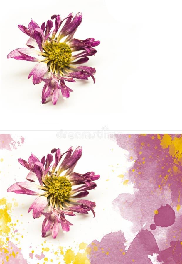 Λουλούδι σε ένα άσπρο υπόβαθρο και ένα λουλούδι με τους λεκέδες στοκ εικόνες